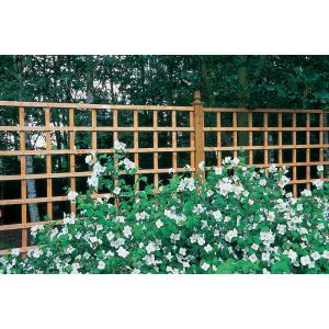 Image for Forest Heavy Duty Trellis - H 183cm x W 91cm x D 3.5cm